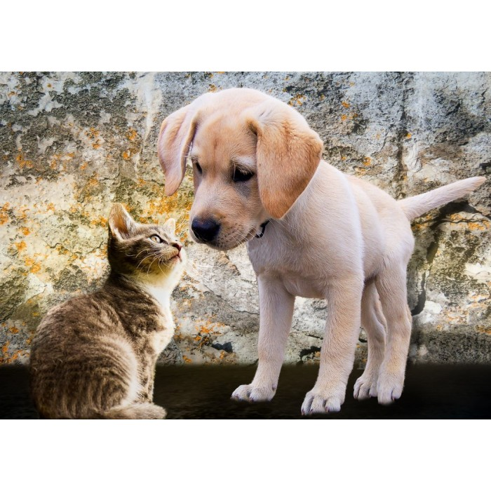Puzzle Bluebird-Puzzle-70004 Kitten and Puppy