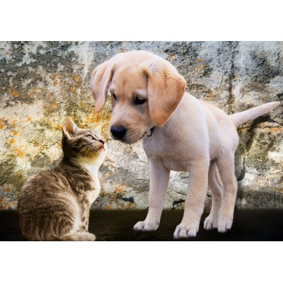 Bluebird-Puzzle - 500 pièces - Kitten and Puppy