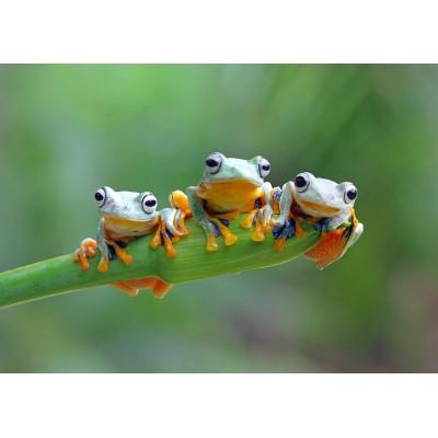 Bluebird-Puzzle - 500 pièces - Friendly Frogs